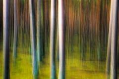 Abstrakter Kiefernwald lizenzfreie stockfotos