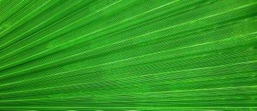 Abstrakter linearer organischer Hintergrund, Palmblattbeschaffenheit Stockbilder