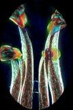 Abstrakter Mikrograph von Blumenteilen einer Anlage des hölzernen Sauerampfers Lizenzfreies Stockbild
