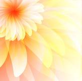 Abstrakter mit Blumenhintergrund Stockfotos