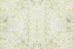 Abstrakter mit Blumenhintergrund Das Muster von Vogelkirschblumen Lizenzfreie Stockfotografie
