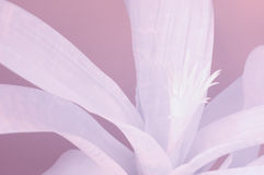 Abstrakter mit Blumenvektor lizenzfreie stockfotos