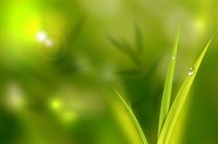 Abstrakter natürlicher Hintergrund mit Gras und waterdrops Lizenzfreies Stockbild