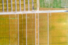 Abstrakter natürlicher Hintergrund Vogelperspektive von geometrischen Weizenfeldern Lizenzfreies Stockfoto