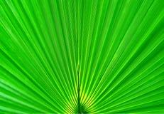 Abstrakter Natur-Hintergrund Schließen Sie herauf grünes Blatt Stockbild