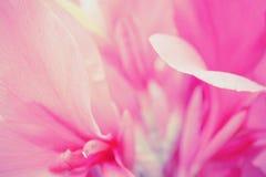 Abstrakter Naturhintergrund der rosa Blumenblumenblätter Lizenzfreies Stockbild