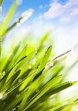 Abstrakter Naturhintergrund des Frühlinges Lizenzfreie Stockfotografie