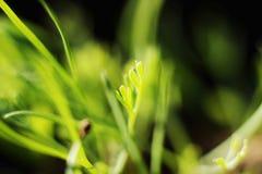 Abstrakter Naturhintergrund des Frühlinges Lizenzfreies Stockfoto