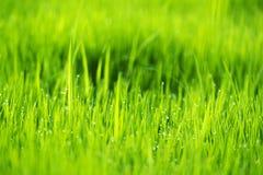 Abstrakter Naturhintergrund mit Gras und Tropfen Stockbilder