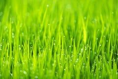 Abstrakter Naturhintergrund mit Gras und Tropfen Lizenzfreie Stockbilder