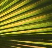 Abstrakter Palmblathintergrund Lizenzfreies Stockbild