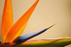 Abstrakter Paradiesvogel Lizenzfreies Stockbild