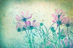 Abstrakter Retro- Hintergrund von den Kosmosblumen filterte durch Schmutzbeschaffenheit Stockfotos