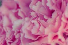 Abstrakter rosa Pfingstrosenblumenhintergrund benutzt als Hintergrund illustr Stockbilder