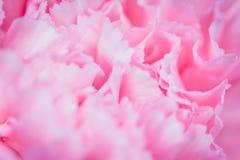 Abstrakter rosa Pfingstrosenblumenhintergrund benutzt als Hintergrund illustr Lizenzfreie Stockbilder