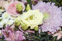 Abstrakter rosafarbener mit Blumenhintergrund und Aster rosa gelbes empfindliches L Stockfotografie