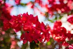 Abstrakter roter Blumen-Hintergrund stockfotos