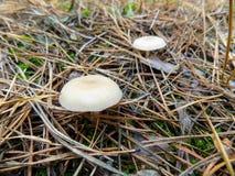 Abstrakter schöner Pilzhintergrund Autumn Forest-Tapete Lizenzfreies Stockfoto