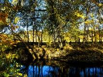 Abstrakter schöner Waldhintergrund Naturtapetenhintergründe Stockfoto