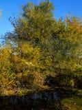Abstrakter schöner Waldhintergrund Naturtapetenhintergründe Lizenzfreies Stockbild