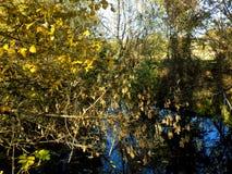 Abstrakter schöner Waldhintergrund Naturtapetenhintergründe Lizenzfreie Stockfotografie