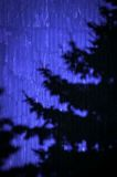 Abstrakter Schattenbaum Lizenzfreie Stockfotografie