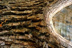Abstrakter Schmutzhintergrund - braune Barke des Baums Lizenzfreie Stockbilder