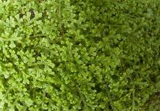 Abstrakter Schuss des grünen Blattes Stockfotografie