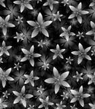 Abstrakter Schwarzweiss-Blumenhintergrund Stockbild