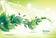 Abstrakter Sommerhintergrund mit grünen Blättern. Stockbild