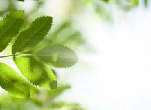Abstrakter Sommerhintergrund mit grünen Blättern Lizenzfreies Stockbild