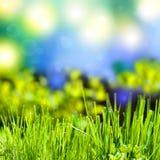 Abstrakter Sommerhintergrund mit Gras lizenzfreies stockbild