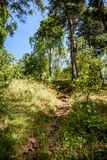 abstrakter Sommerwald Stockfoto