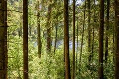 abstrakter Sommerwald Stockfotos