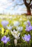 Abstrakter sonniger Frühlingshintergrund stockfotos