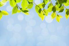 Abstrakter sonniger Sommer bokeh Hintergrund Lizenzfreies Stockbild