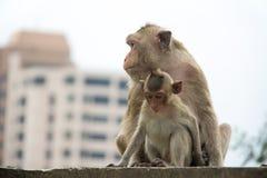 Abstrakter Tieraffe, glaubende Liebe mit ihrer Familie Lizenzfreies Stockbild
