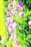 Abstrakter Unschärfehintergrund und weiche Natur Lizenzfreie Stockbilder
