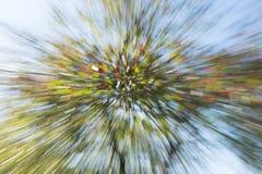 Abstrakter Zoom des Baums mit Blumen lizenzfreies stockfoto