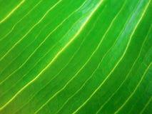 Abstraktes bacground von glühenden diagonalen Linien, natürliches grünes Blatt lizenzfreie stockbilder