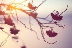 Abstraktes Betriebsschattenbild bei Sonnenuntergang Lizenzfreies Stockbild