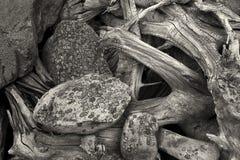 Abstraktes Bild der Natur B&W Stockfotos