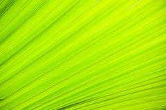 Abstraktes Bild von grünen Palmblättern in der Natur Stockbild