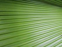 Abstraktes Bild von grünen Palmblättern in der Natur, schöne Palmenweide Lizenzfreies Stockbild