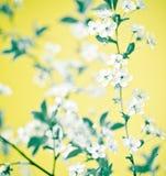 Abstraktes Blumen stockbilder