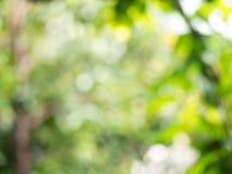 Abstraktes bokeh verlässt hellgrüner Unschärfehintergrund vom Grün Baumnatur Stockfotos