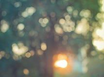 Abstraktes buntes Unschärfede fokussierte Hintergrundschattenbaum mit Sonnenlicht Lizenzfreie Stockfotos