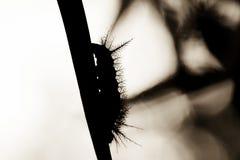 Abstraktes Caterpillar auf Blatt silhouettieren Lizenzfreie Stockfotografie