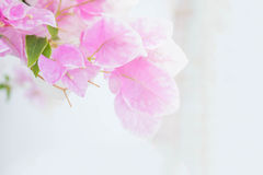 Abstraktes De fokussiert von den Papierblumen Stockfotos