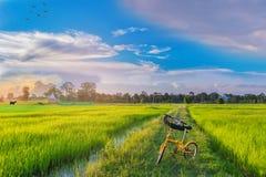 Abstraktes der Weichzeichnung Schattenbild halb das Fahrrad, grüne das Feld des ungeschälten Reises mit dem schönen Himmel und di Stockfotografie